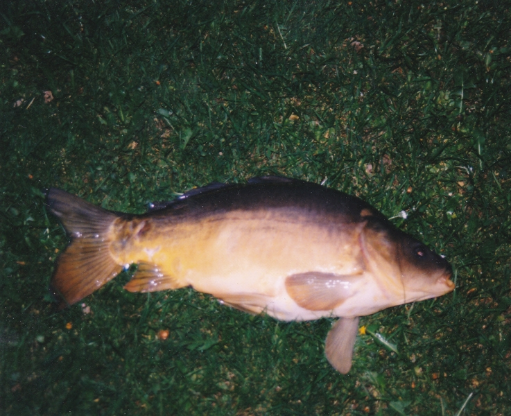 vorbereitungslehrgang fischerprüfung bayern